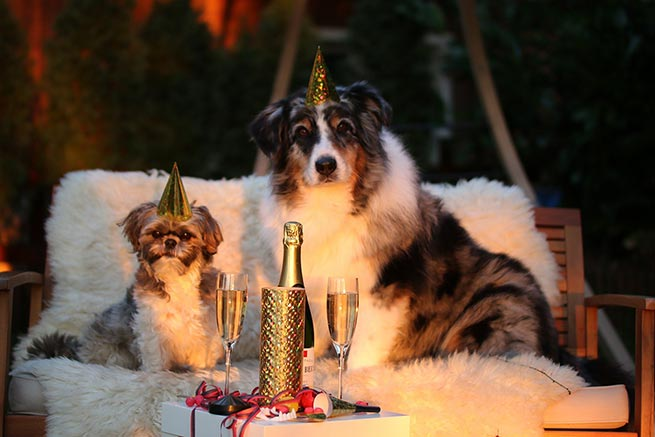 dogs at new year